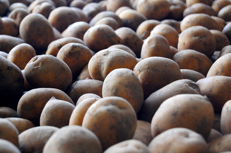 spoiling: Potatoes store in cold climate to avoid bulb spoiling