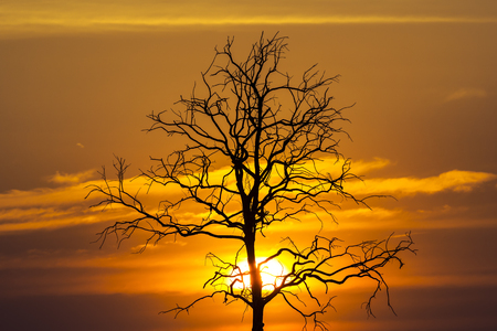 Sunset  with tree branch at evening time  photo