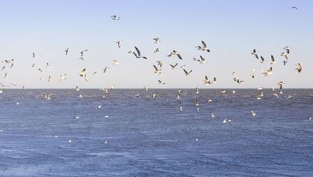 samutprakarn: Flock of seagull with sea and sky background at Bangpu, Samutprakan, Thailand.