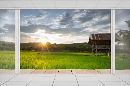 green park: Open door with rice field background.