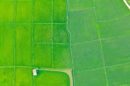Aerial view of green agricultural field and area.