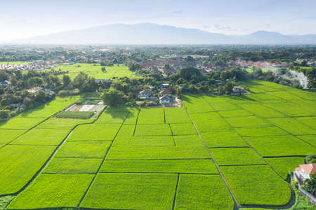 Cultivated land and land plot or land lot. Consist of aerial view of green field, agricultural plant and ridge. That is tract of land for cultivate, owned, sale, development, rent, buy or investment. 版權商用圖片 - 162531951