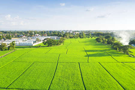 Land plot in aerial view. Include landscape, green field, crop, agricultural plant. Tract of land for housing subdivision, residential, development, owned, sale, rent, buy or investment in Chiang Mai. 版權商用圖片