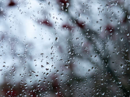 Raindrops on the glass. In the background, red Rowan berries in a blur.