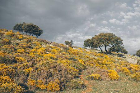 Mountain landscape. Beautiful cloudy moutainscape at Grazalema. Landscape with yellow wildflowers. Cystisus oromediterraneus. Mountain scene. Serene scenery in wild nature.