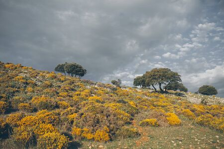 Mountain landscape. Beautiful cloudy moutainscape at Grazalema. Landscape with yellow wildflowers. Cystisus oromediterraneus. Mountain scene. Serene scenery in wild nature.