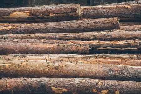 outdoor fireplace: Pine logs background. Timber industry. Tree trunks texture and background for designers. Close up view of cut tree trunks in the forest. Wood pile texture. Stock Photo