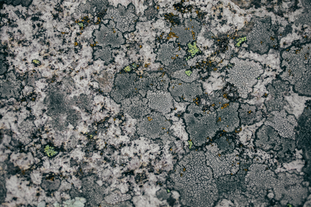 Rock, lichen and moss texture and background. Mossy stone background. Abstract texture and background for designers. Mossy stone texture. Closeup view of lichen and moss. Stok Fotoğraf - 81453676