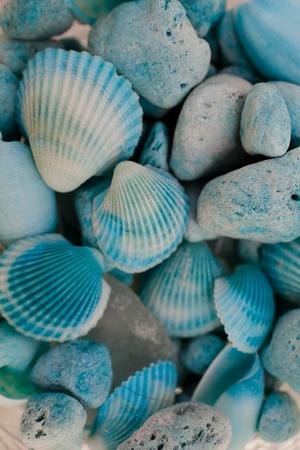 crustaceans: Macro view of seashells. Seashell background. Texture of blue seashells.