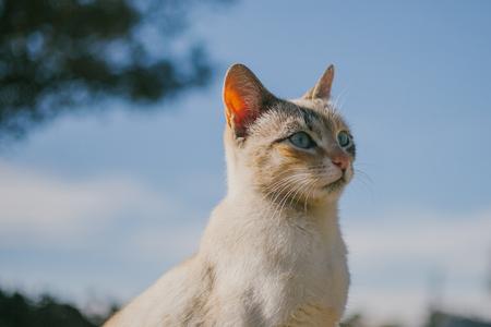 European cat portrait. Portrait of beautiful cat. Cute three color cat. European short haired cat.