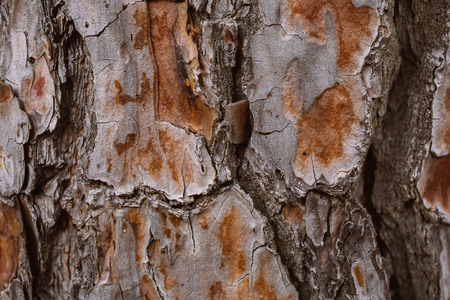 Pine tree bark background. Bark tree texture. Abstract texture and background for designers. Organic texture. Rough abstract texture. Natural pattern. Macro view of pine tree bark texture. Stock fotó