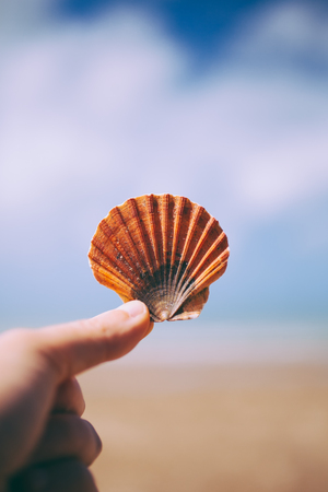 Hand holding a seashell. Woman hand with a seashell in blue sky and ocean background. Closeup view of beautiful seashell in hand.