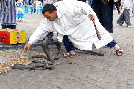 charmer: Marrakech, Morocco - April 20th of 2014: Snake charmer facing two egyptian cobras at Djemaa el Fna square, a place recognized by UNESCO as a masterpiece of the Oral and Intangible Heritage of Humanity Editorial