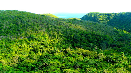 extensive: Extensive cuban jungle viewed from the road that goes from Havana to Varadero