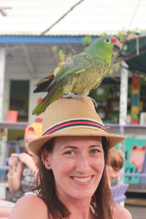 bocas del toro: Portrait of a young beautiful woman with a green macaw standing over her hat in a nice bar in Bocas del Toro harbor, Colon Island, Panama.