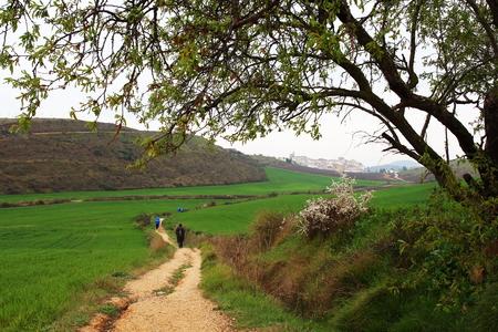 navarra: Pilgrims walking through endless green fields during a rainny spring morning, Camino de Santiago, Navarra, Spain.