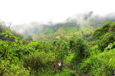 Massive rainforest and coffee plantations covered by mist and fog in close to the smaill town of Boquete, in Panamas western-most Province of Chiriquí.