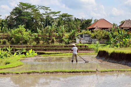 A lonely farmer working on the rice paddies close to Campuhan ridge walk. Thousands of tourists visit these terraces in Ubud (Bali) every single day of the year.