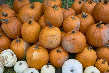 Group of pumpkins of different colors.Halloween staff Stock Photo