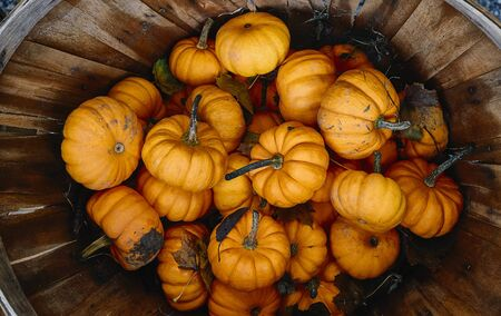 Group of pumpkins of different colors.Halloween staff Imagens