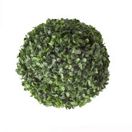 ornamental bush: Ornamental bush isolated on a white background