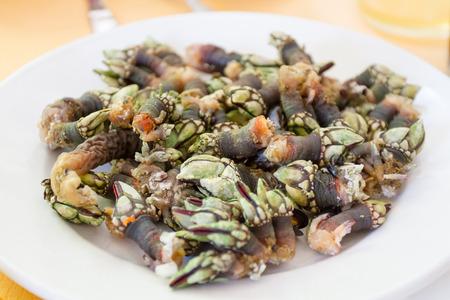 Haşlanmış kaz çekim yemiş için barnacle hazır. Galiçya, İspanya tipik deniz Stock Photo