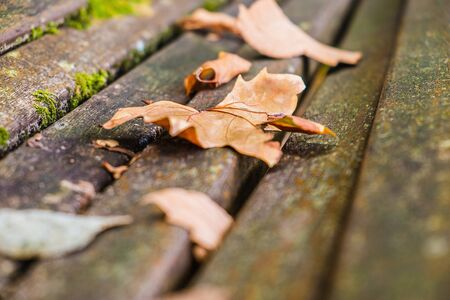 Close up of a bench with fallen leaves in autumn park