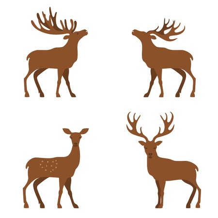 Four cute vector minimalistic deers in standing poses, standing deer flat illustration