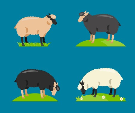 Sheep set collection, with white sheep, black sheep, brown sheep, sheep vector illustration. Иллюстрация