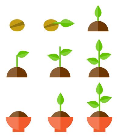 evolucion: Secuencia de germinación de las semillas en el suelo, el concepto de la evolución