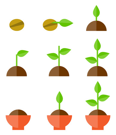 plants growing: Sequence of seed germination on soil, evolution concept