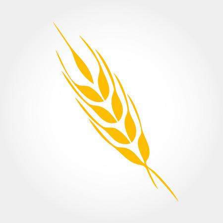 cultivo de trigo: espigas de trigo o de arroz icono. Cultivo, cebada o centeno símbolo aisladas sobre fondo blanco. Elemento de diseño para la etiqueta o en el envase de la cerveza pan. Ilustración del vector.