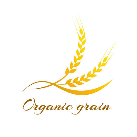 healthy grains: Ears of Wheat, Vector Illustration, Icon of Premium Quality Farm Product