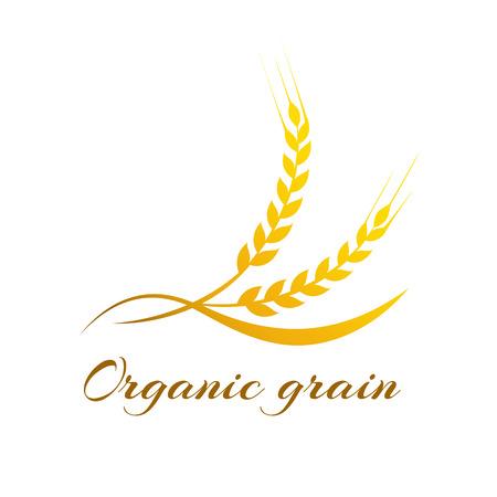 espiga de trigo: Espigas de trigo, ilustración vectorial, Icono de la calidad superior del producto agrícola