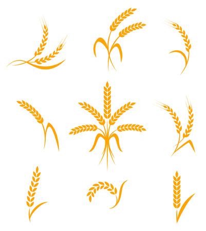 kłosy pszenicy lub ryżu ikony ustaw. Symbole rolne na białym tle. Elementy konstrukcyjne do pakowania chleba lub etykiecie piwa. ilustracji wektorowych.