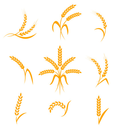 wheat isolated: Wheat ears or rice icons set. Agricultural symbols isolated on white background. Design elements for bread packaging or beer label. Vector illustration.