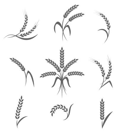 kłosy pszenicy lub ryżu ikony ustaw. Symbole rolne na białym tle. Elementy konstrukcyjne do pakowania chleba lub etykiecie piwa.
