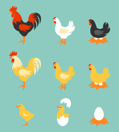 A colorful farm birds collection. Vector Illustration of Rooster, Hen, Chick and Eggs. Ilustração