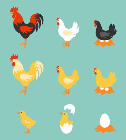 pollo caricatura: Una colecci�n de aves de granja colorido. Ilustraci�n del vector del gallo, gallina, polluelo y los huevos.