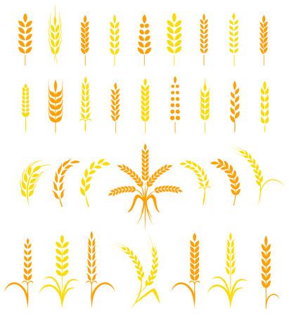 심플하고 세련된 밀 귀 아이콘과 맥주 디자인 요소, 유기 현지 농장 신선한 음식, 빵집 테마 디자인의 집합입니다.