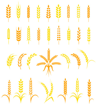 Set of simple and stylish Wheat Ears icons and design elements for beer, organic local farm fresh food, bakery themed design. Иллюстрация