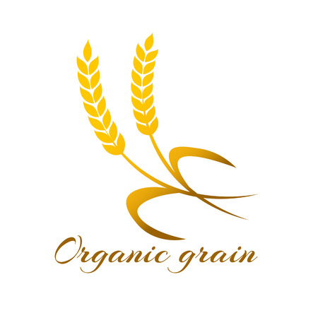 wheat harvest: Wheat ear symbols for design. Agriculture grain, organic plant, bread food, natural harvest, illustration.