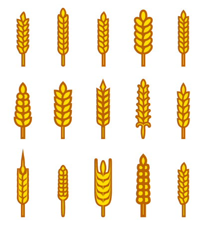 plant seed: Ears of wheat bread symbols. Organic and bread, agriculture seed, plant and food, natural eat.