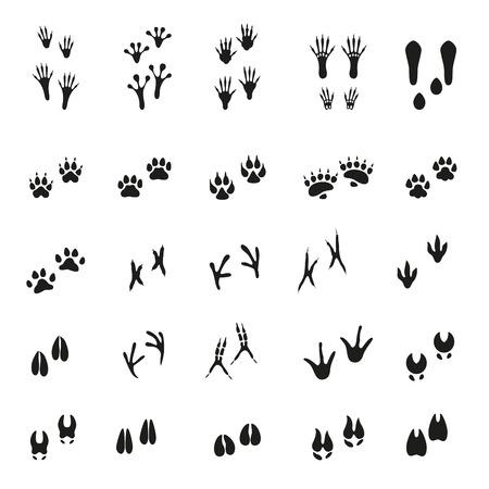 vogelspuren: Satz von Spuren von Tieren und Vögeln