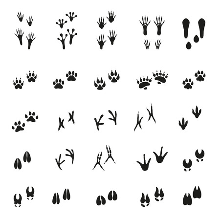 bear footprints: Set of traces of animals and birds