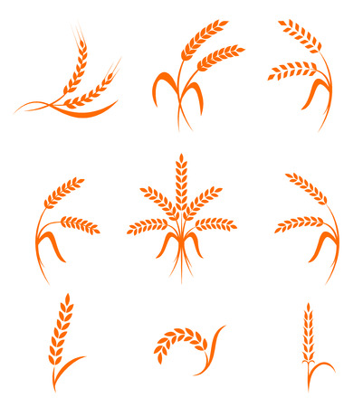 white bread: Wheat ears or rice icons set. Agricultural symbols isolated on white background. Design elements for bread packaging or beer label.