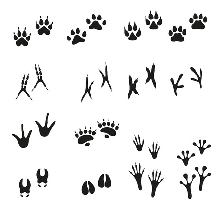 footprints in sand: Tracks of wild animals and birds. Paw print. Isolated icons on white background. Illustration