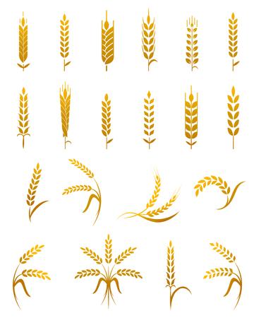 Set di semplici grano orecchie icone ed elementi di design per la birra di frumento, grano biologico fattoria locale di alimenti freschi, prodotti da forno a tema la progettazione di grano, grano, elementi di grano, frumento semplice. Archivio Fotografico - 59409356