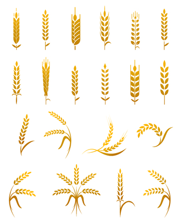 wheat isolated: Set of simple wheat ears icons and wheat design elements for beer, organic wheat local farm fresh food, bakery themed wheat design, wheat grain, wheat elements, wheat simple.