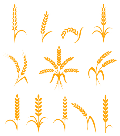wheat bread: Wheat ears or rice icons set. Agricultural symbols isolated on white background. Design elements for bread packaging or beer label. illustration.